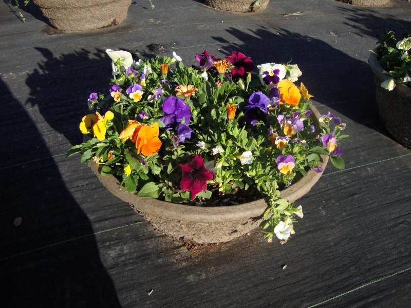 Insert of mixed annuals