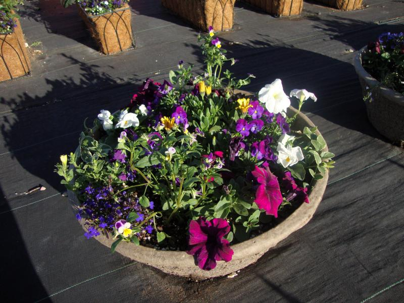 Insert with mixed annuals